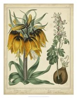 Golden Crown Imperial Fine Art Print