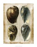"Antiquarian Seashells III by Vision Studio - 22"" x 28"" - $34.49"