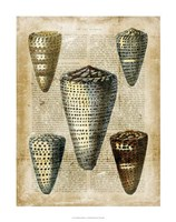 "Antiquarian Seashells IV by Vision Studio - 22"" x 28"" - $34.49"