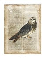 "Antiquarian Birds I by Vision Studio - 22"" x 28"" - $34.49"
