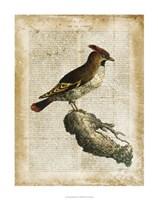 "Antiquarian Birds III by Vision Studio - 22"" x 28"""