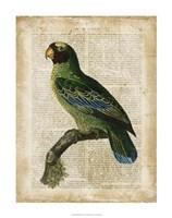 "Antiquarian Birds VI by Vision Studio - 22"" x 28"" - $34.49"