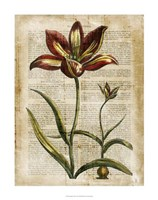 """Antiquarian Tulips I by Vision Studio - 22"""" x 28"""" - $34.49"""