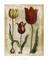 """Antiquarian Tulips II by Vision Studio - 22"""" x 28"""" - $34.49"""