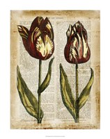 """Antiquarian Tulips III by Vision Studio - 22"""" x 28"""" - $34.49"""