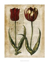 """Antiquarian Tulips IV by Vision Studio - 22"""" x 28"""" - $34.49"""