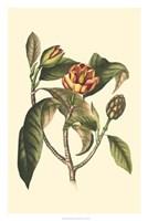 "Flourishing Foliage I by Vision Studio - 20"" x 30"""