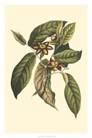 "Flourishing Foliage IV by Vision Studio - 20"" x 30"""