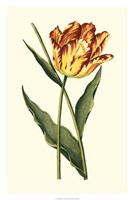 "Vintage Tulips I by Vision Studio - 20"" x 30"""
