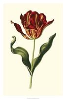 "Vintage Tulips II by Vision Studio - 20"" x 30"""