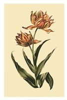 "Vintage Tulips III by Vision Studio - 20"" x 30"""