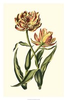 "Vintage Tulips IV by Vision Studio - 20"" x 30"""