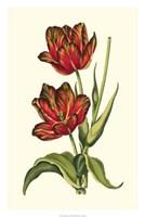 "Vintage Tulips V by Vision Studio - 20"" x 30"""