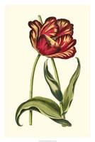 "Vintage Tulips VI by Vision Studio - 20"" x 30"""