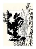 Translucent Wildflowers IX Fine Art Print