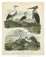Heron & Crane Species I Fine Art Print