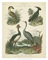 Heron & Crane Species II Fine Art Print