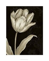 "Classical Tulip I by Ethan Harper - 24"" x 30"", FulcrumGallery.com brand"