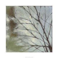"Diffuse Branches I by Jennifer Goldberger - 30"" x 30"""