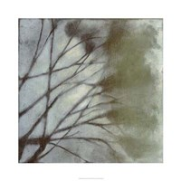 "Diffuse Branches II by Jennifer Goldberger - 30"" x 30"""