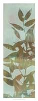 "Leaf Overlay II by Jennifer Goldberger - 12"" x 32"" - $24.99"