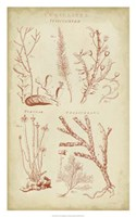 Coralline II Fine Art Print