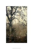 "Wooded Solace I by Jennifer Goldberger - 22"" x 32"""