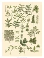 "Abundant Foliage II by John Miller - 24"" x 32"""