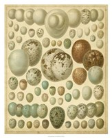 Vintage Bird Eggs I Fine Art Print