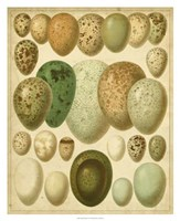 "Vintage Bird Eggs II by Bert Meyers - 32"" x 32"""