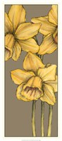 Graphic Flower Panel IV Fine Art Print