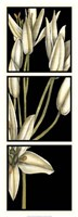 "Graphic Lily II by Jennifer Goldberger - 13"" x 34"", FulcrumGallery.com brand"