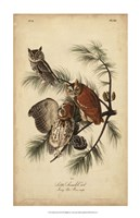 "Audubon Screech Owl by John James Audubon - 22"" x 34"""