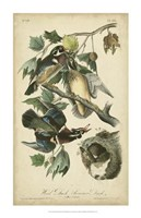 "Audubon Wood Duck by John James Audubon - 22"" x 34"""