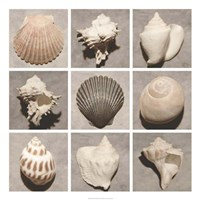 "Weathered Shell Sampler by Renee Stramel - 34"" x 34"" - $74.99"