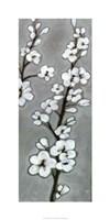 """White Blossoms II by Jennifer Goldberger - 18"""" x 36"""""""