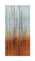 "Birch Forest I by Jennifer Goldberger - 21"" x 36"", FulcrumGallery.com brand"
