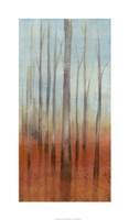 "Birch Forest II by Jennifer Goldberger - 21"" x 36"", FulcrumGallery.com brand"