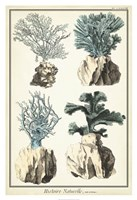 """Oversize Coral Species III by Vision Studio - 26"""" x 38"""", FulcrumGallery.com brand"""