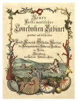 Cabinet of Conchology Fine Art Print