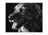 """Canine Scratchboard XIV by Julie Chapman - 13"""" x 10"""""""