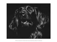 """Canine Scratchboard XV by Julie Chapman - 13"""" x 10"""""""