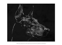 """Canine Scratchboard XVI by Julie Chapman - 13"""" x 10"""""""