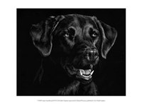 """Canine Scratchboard XVII by Julie Chapman - 13"""" x 10"""""""