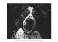 """Canine Scratchboard XVIII by Julie Chapman - 13"""" x 10"""""""