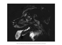 """Canine Scratchboard XIV - black by Julie Chapman - 13"""" x 10"""""""