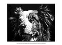 """Canine Scratchboard XX by Julie Chapman - 13"""" x 10"""""""