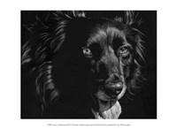"Canine Scratchboard XXI by Julie Chapman - 13"" x 10"""