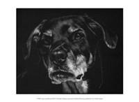 """Canine Scratchboard XXII by Julie Chapman - 13"""" x 10"""""""