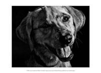 """Canine Scratchboard XXIII by Julie Chapman - 13"""" x 10"""""""